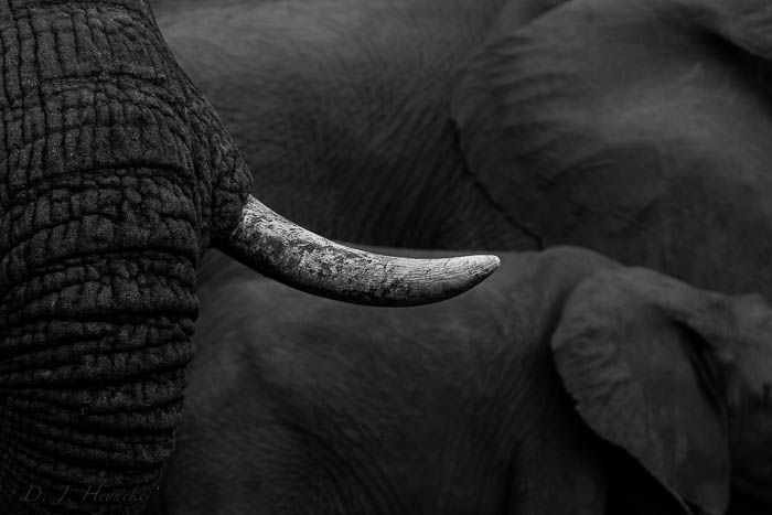 Some of Africa's most iconic textures. Photograph by Don Heyneke