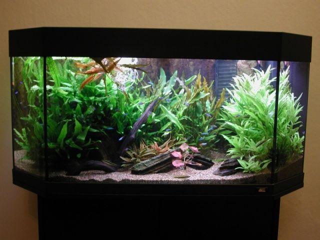 Contoh membuat dekorasi akuarium dengan biaya murah for Decoration maison aquarium