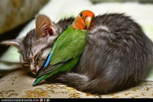 cute animals - Daily Squee: Interspecies Love: Snuggly Kitty Bed