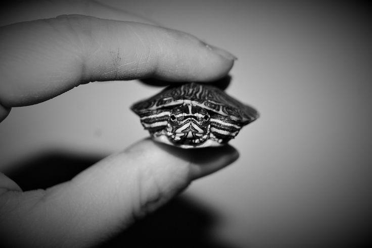 Ahahah I love this baby shell so bad! ^^ https://flic.kr/p/FDdf7n | Tarty #portrait | Giulia bergonzoni #photography #lovely #turtle #baby