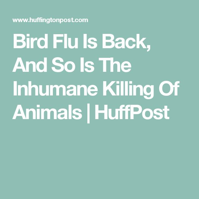 Bird Flu Is Back, And So Is The Inhumane Killing Of Animals | HuffPost