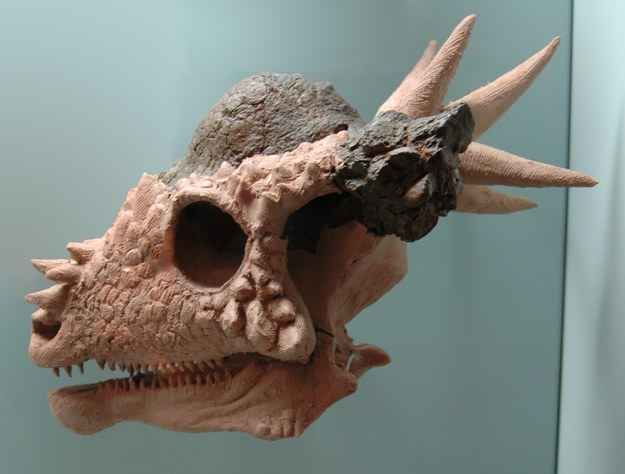 11 best dinosaurs images on pinterest dinosaurs about dinosaurs 15 dinosaurs youve probably never heard of fandeluxe Ebook collections