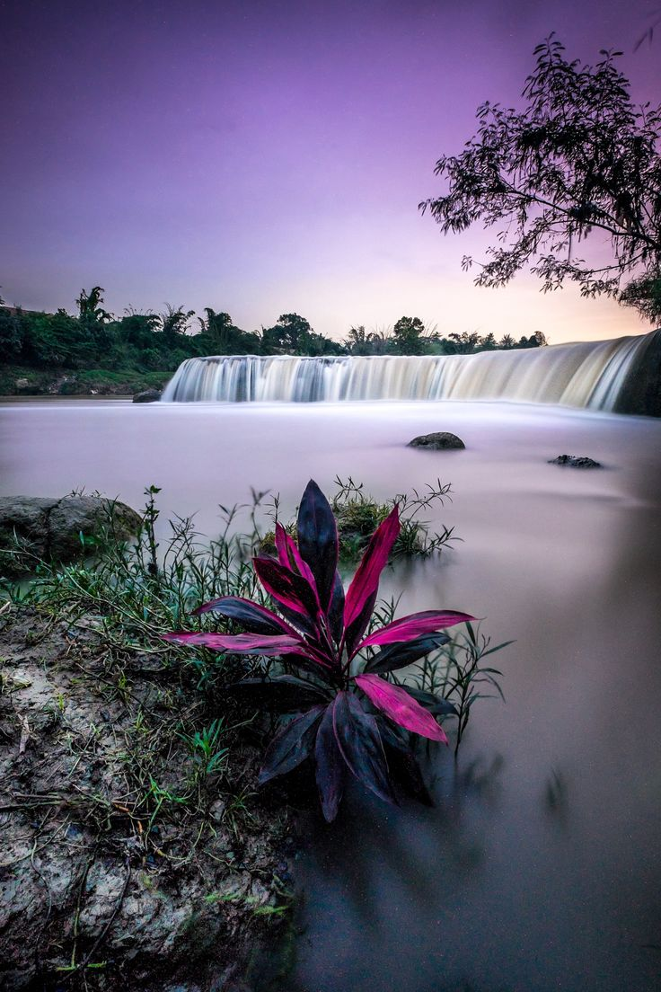 bekasi waterfall - indah nusa  -- magenta  purple