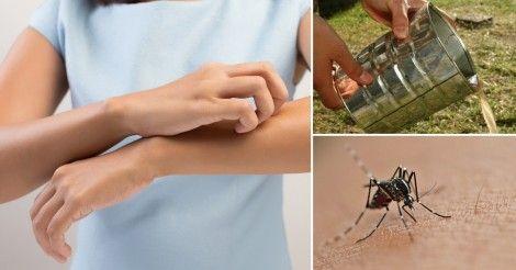 Cómo se pueden evitar el zika, el dengue y la chikungunya