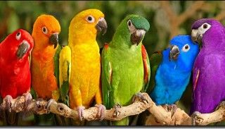 love their bright colors