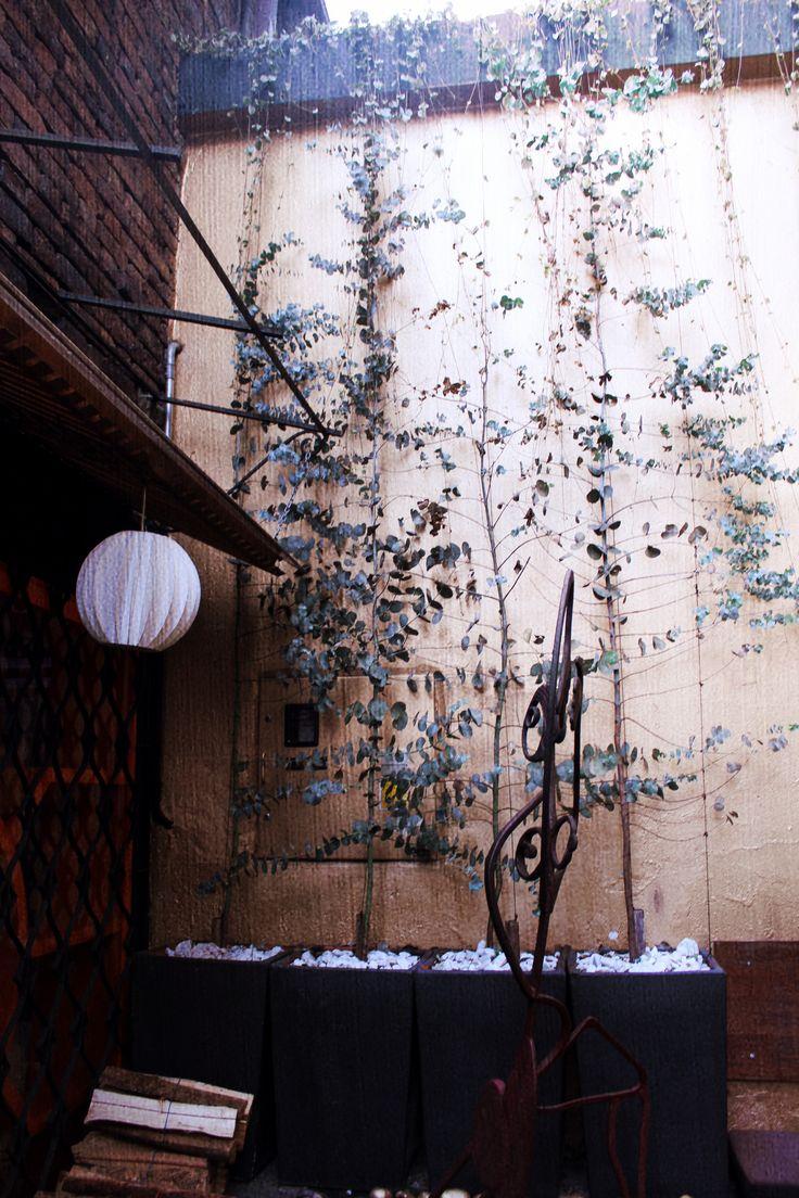 Conoce el Jardín de Daniel Dine And Wine. #Jardín #Garden #Bogota