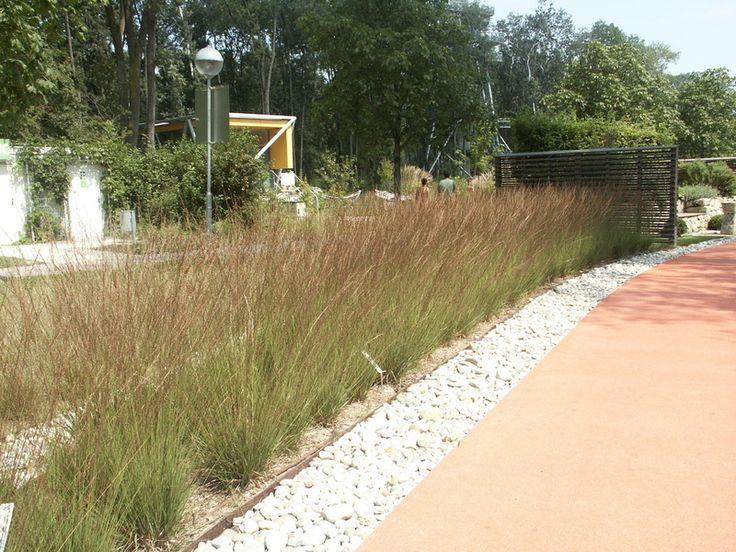 Taxon Molinia caerulea ´Edith Dudszus´ | Nonverbální a jiné inovativní formy podpory ve výuce na Zahradnické fakultě v Lednici, reg. č.: CZ.1.07/2.2.00/15.0084