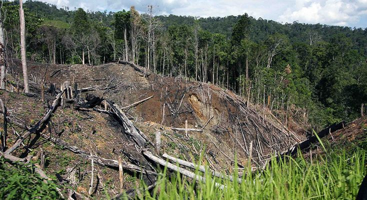 Seeing the Forests from the Trees: What Prabowo and Jokowi Offer