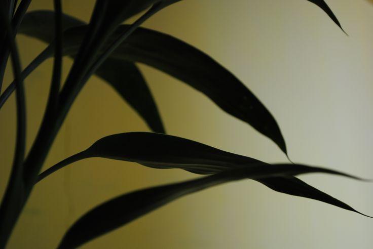 tanaman dalam rumah