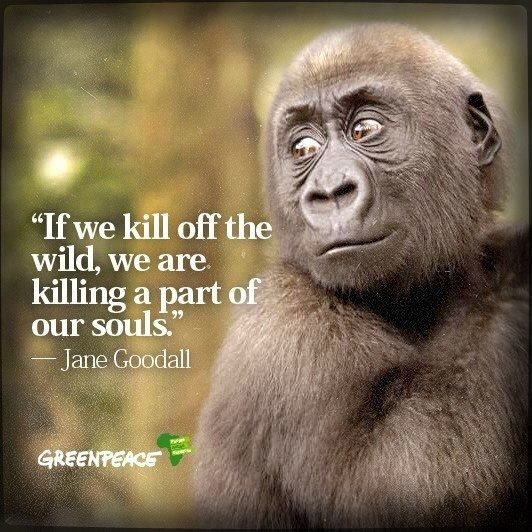 Jane Goodall Quotes: Jane Goodall Quotes About Animals. QuotesGram
