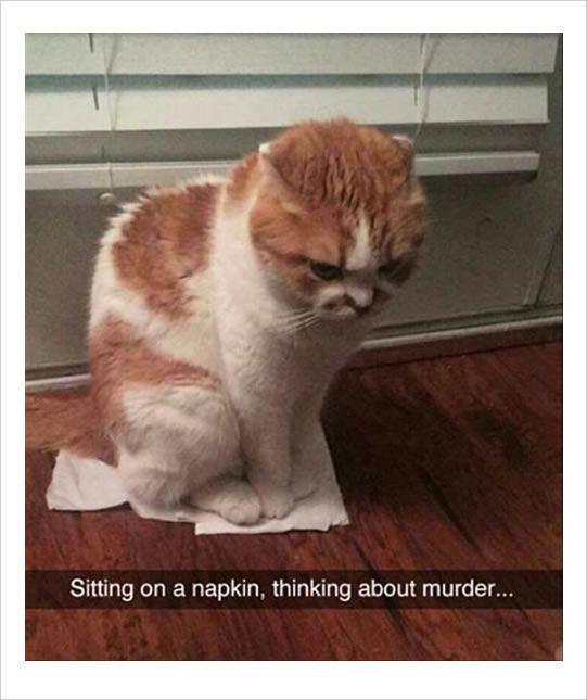 #funnycat