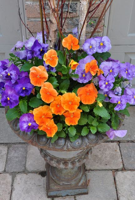 Container garden. Bolder colors than normal - love this pansy combination