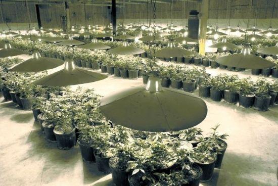 The perfect Marijuana Grow Room setup. Marijuana Grow Room Design & Videos on How to Setup the Best Residential or Commercial Grow Operation