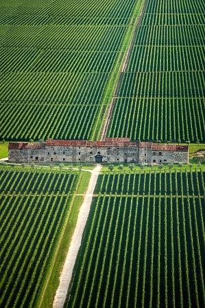 Fields of vines and old county house in Veneto Italy