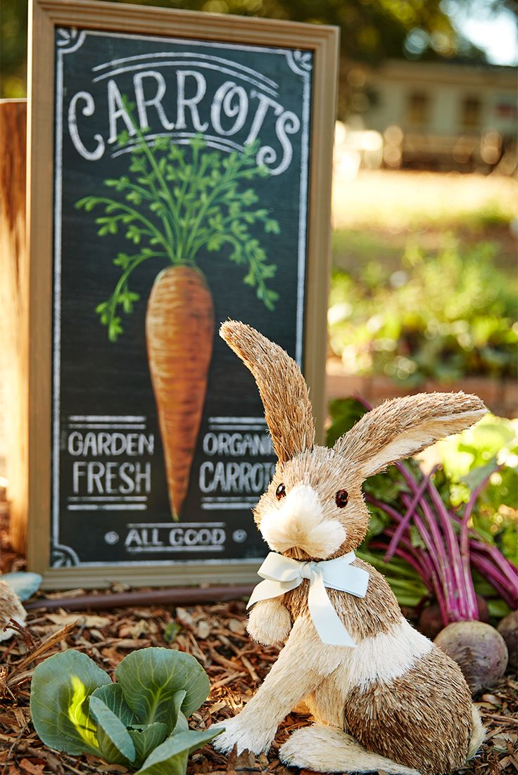 Pier 1 has plenty of ways to help you lure the Easter Bunny to your house, including this tempting Fresh Carrots Wall Decor and some bunny friends. They don't talk much, but they're great listeners.