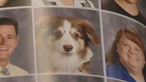 Will you sniff my yearbook?