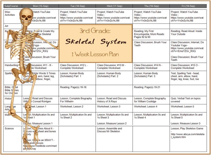 Lesson Plan -- Learn the Skeletal System {Grade Three Unit Study}
