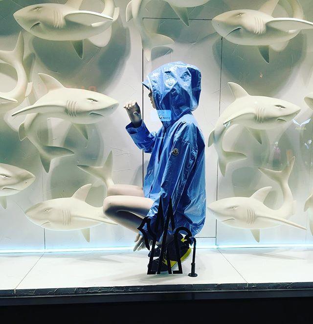 """WEBSTA @ marco_ppinto - Isto é uma montra de uma loja de roupa/esqui mas não sei o que a manequim está a tentar fazer ou fez...queria agarrar o """"tubarão""""? / Is she trying to grab the """"shark""""? 🤔#shark #animal #manequin #tubarao #montra #whatareyoudoing #windowdisplay #grab #showcase #porn #parentaladvisoryexplicitcontent"""