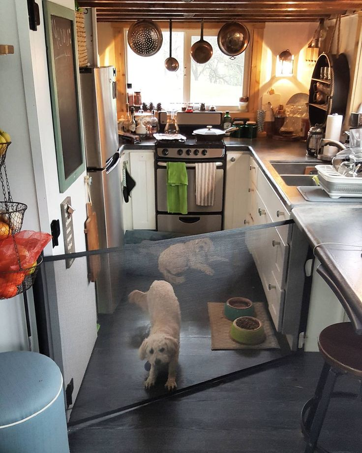 Dogs In A Tiny House? This Is How We Manage Our Pups In