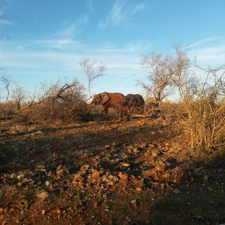 A bad day in the bush is better than any great day at work. Elephants enjoying the afternoon sun around the camp.  Photo Credit: Chantelle Terblanche