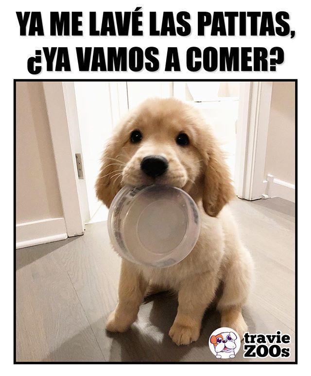Ya Sirvanme Que Tengo Mucha Hambre Beagle Dog Dog Friends Pretty Animals