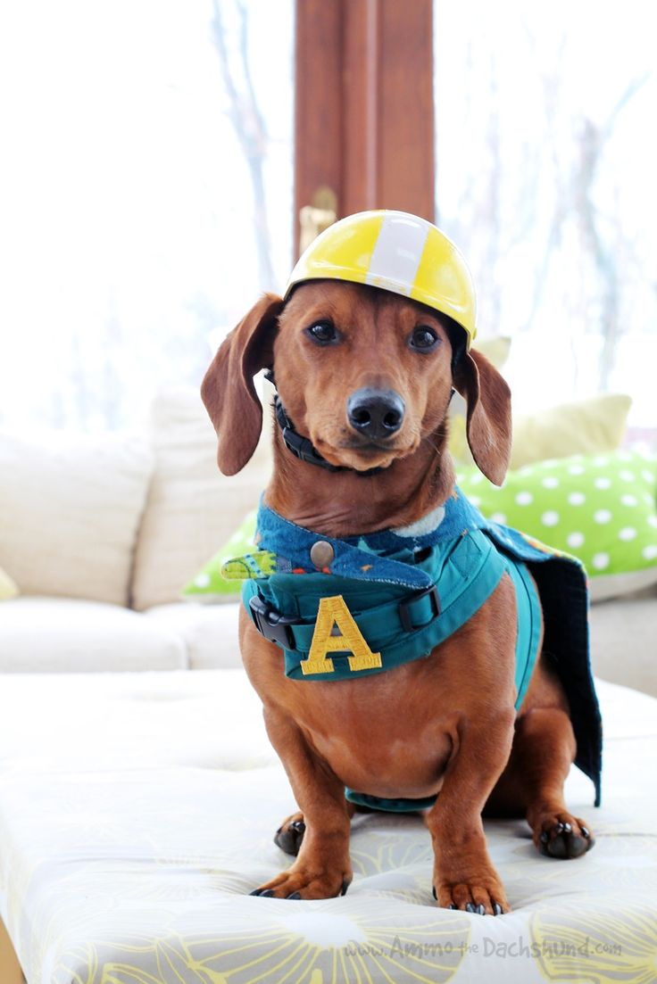 8 best Cute Dog Costumes images on Pinterest | Cute dog ... | 736 x 1103 jpeg 80kB