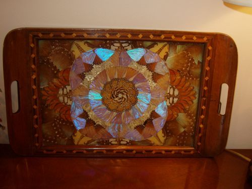 Antique Tray Made With Real Butterflies Antique