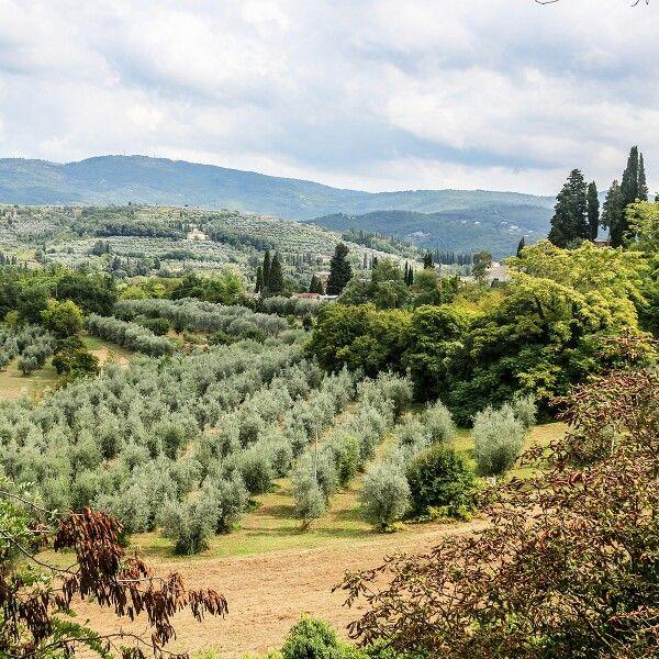 Съездили в Ареццо и посмотрели, наконец, ту самую капеллу, которую расписал фресками Пьеро делла Франческа. Но сначала вот какие виды открываются из парка возле местного Дуомо.