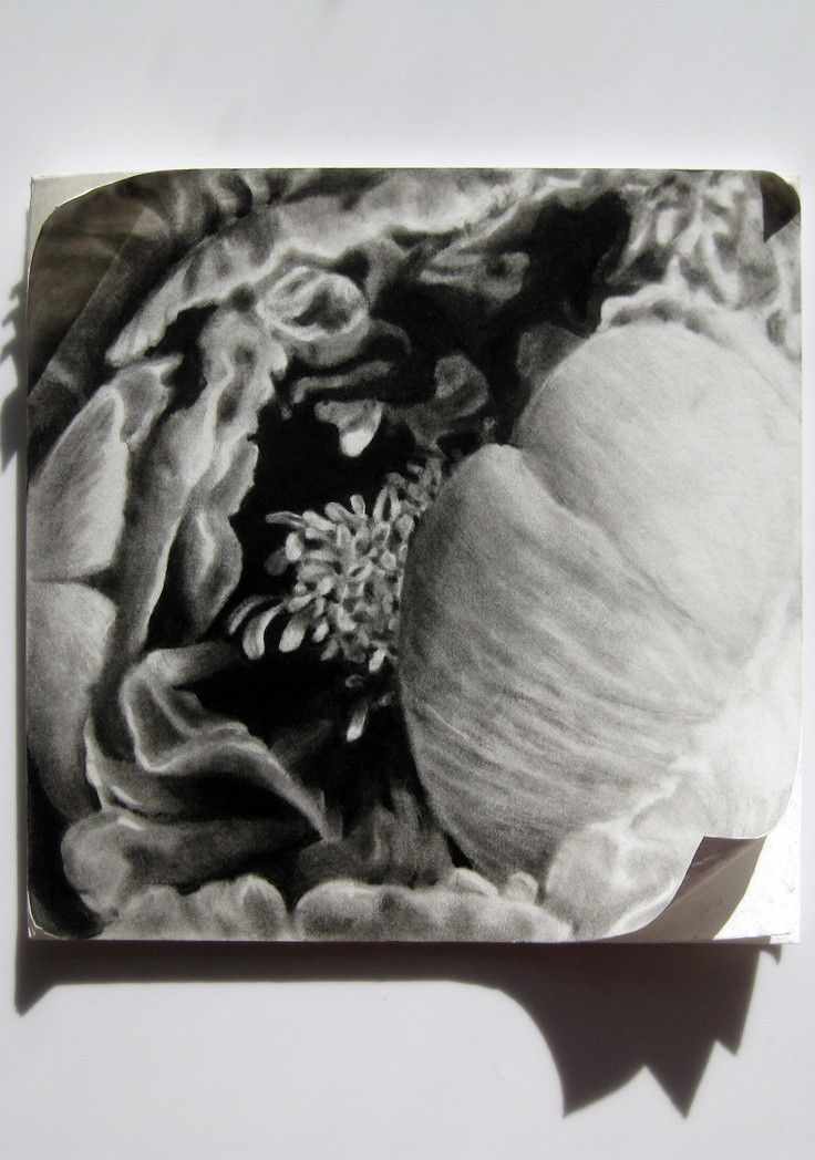 Six Stages IV by Haywood   PLATFORMstore. Charcoal drawing on mat board