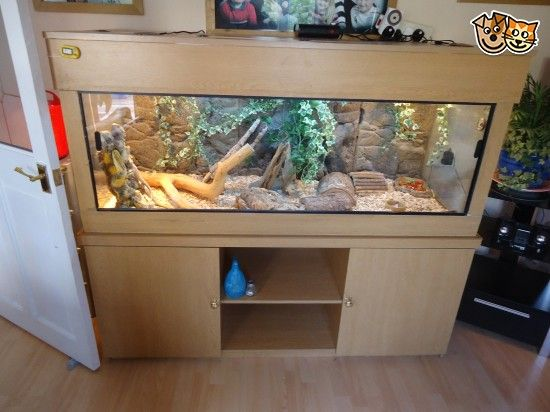 This is male and female bearded dragon they are very tame love to be around people The VIV come with a new UVB light heat lamps and 2 heat mats a wate...