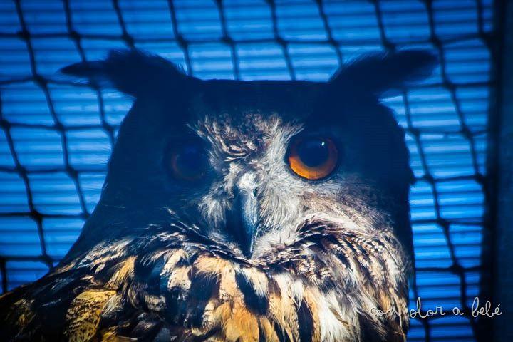 #buho #owl Agosto'14
