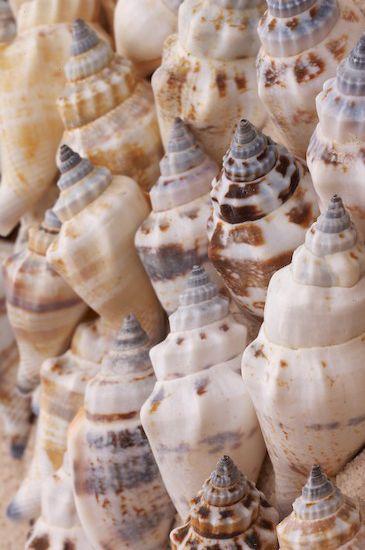 Sea Shells by Byron Jorjorian