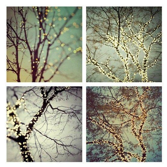 trees: Christmas Time, Twinkle Lights, Night Lights, Winter Photography, Fairies Lights, Art Prints, Christmas Lights, Trees Branches, Fairy Lights