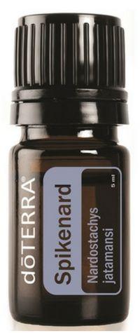 Spikenard Essential Oil Nardostachys jatamansi Description Spikenard, a flowering plant of the Valerian family, is native to high altitudes in the ... Check more at http://anaturalshift.com/spikenard-essential-oil/