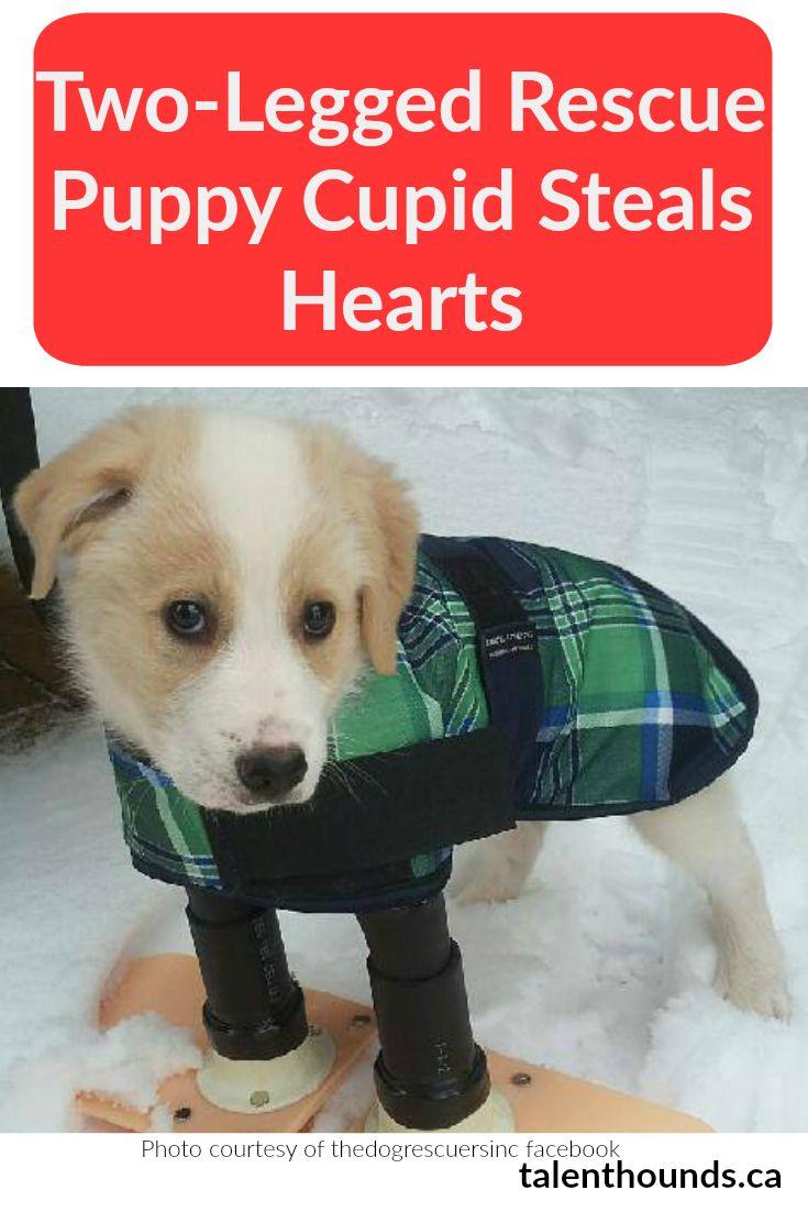 Adopt a puppy 07030