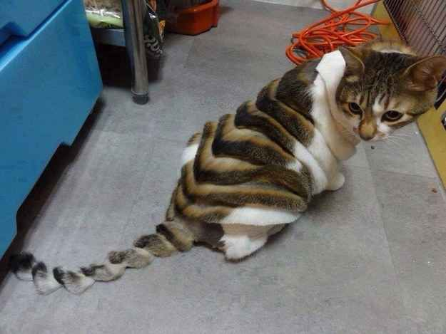 Crazy cat looks like a loaf of bread!