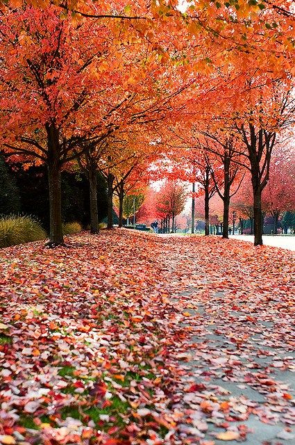 Best places to see fall foliage in Seattle