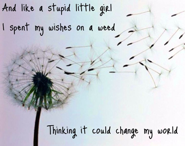 """Kacey Musgraves """"Dandelion"""" Pin put together by: @looneybin5150"""