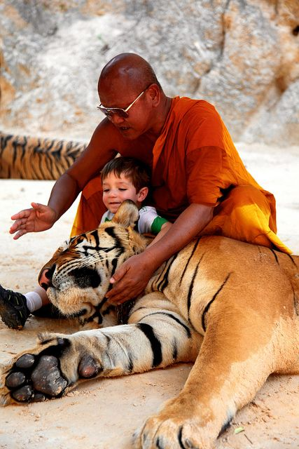 The Tiger Temple, Thailand / olokosmon / flammedunord / duo / enfant / composition / animaux / félin / tigre
