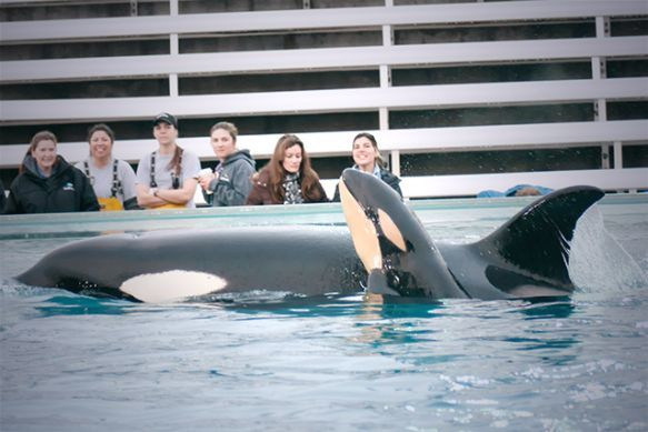 SeaWorld's Worst Nightmare: Richard Bloom to Propose Ban on Orcas in Captivity With the Orca Welfare and Safety Act