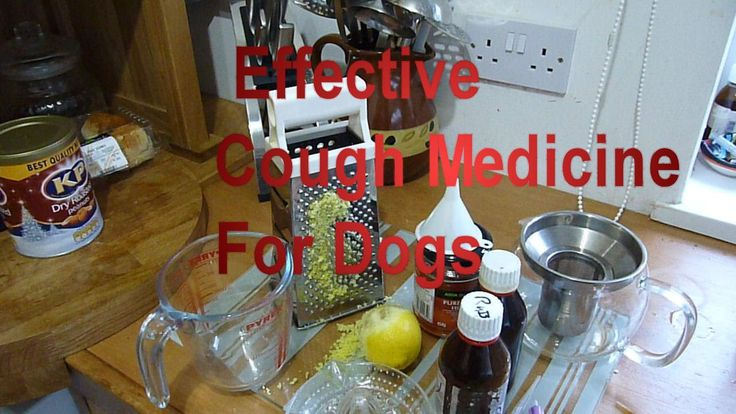 Cough Medicine For Dogs, Home Made Recipe Highly Effective Remedy for Kennel Cough etc