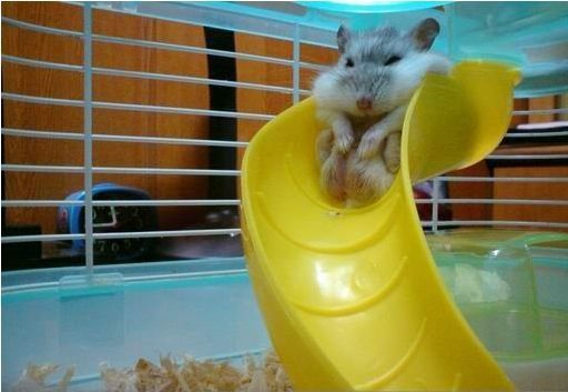 Does this slide make me look fat?