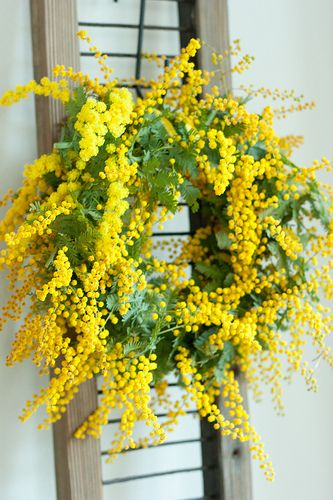 GOLDEN WATTLE WREATH ♡♥♡♥♡♥