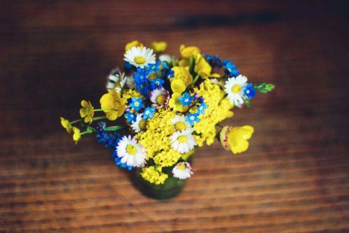 { Anna Słapek - fotografia } #flowers #poland