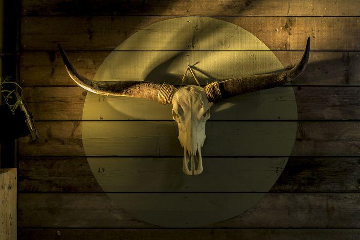 Longhorn ongebleekt, kom onze prachtige schedels bekijken in onze showroom!  #leveninstijl #leveninstijlmeubelmakerij #longhorn #schedels #buffelschedel #hoorns