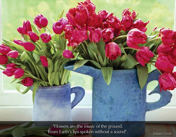 "Flowers & Gardens - 2016 Promotional Calendar  May 2016 - Tulips in blue pitcher  ""Flowers are the music of the ground. From Earth's lips spoken without a sound"".  Edward Curran"