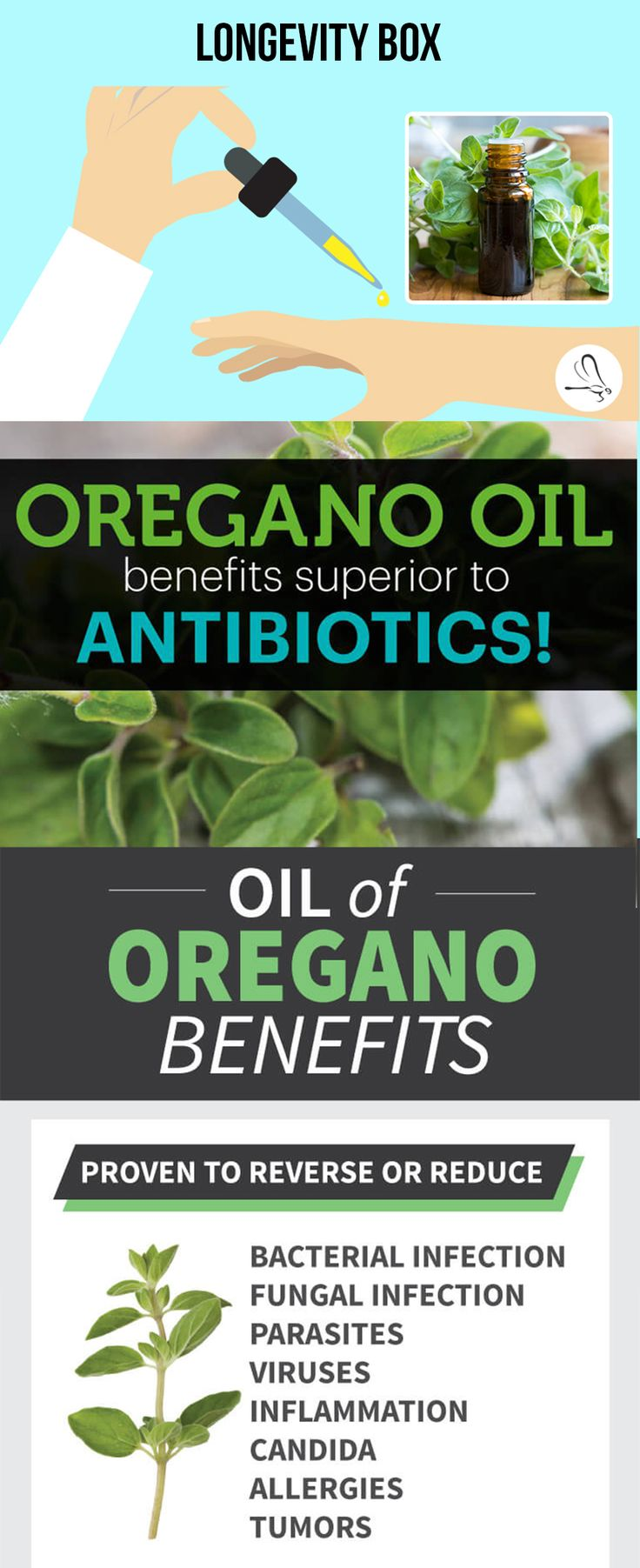 benefits of oil of oregano essay Rich with such substances, oregano and especially its essential oil is endowed with strong antimicrobial and antioxidant characteristics which are most of the basis of its use in medicine read more.