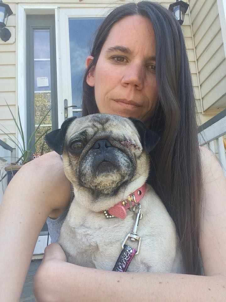 Lovely Photo What A Personality Of A Pug Pugs Animals Photo
