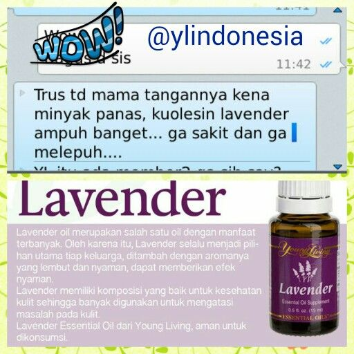 Testi_ lavender oil#testi lavender youngliving essential oil #youngliving #ylindonesia