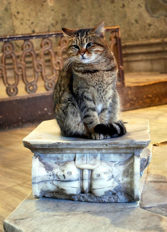 the cat of Hagia Sophia museum In Istanbul turkey